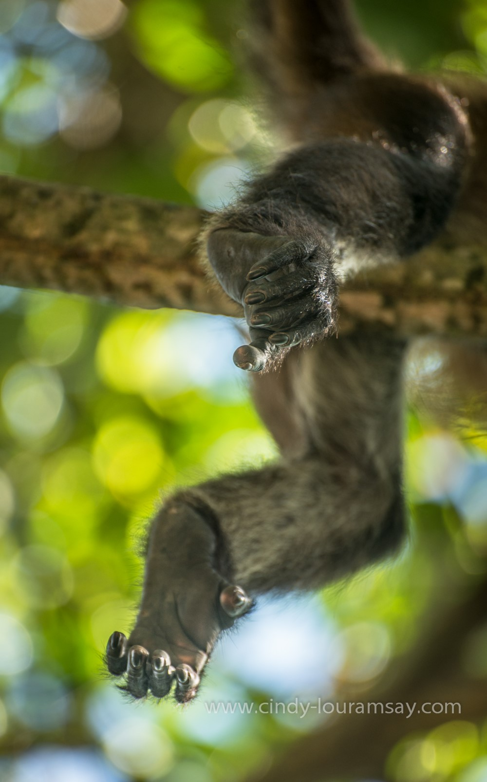 Spider Monkey feet Cindy Lou Ramsay Photography